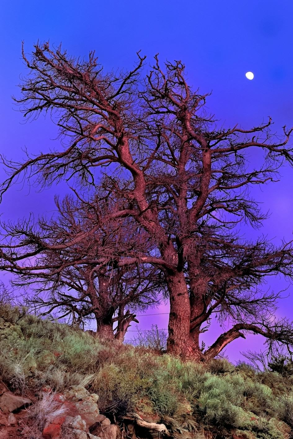 Magical Moonlight Over Lost Rocky Mountain Pine Image