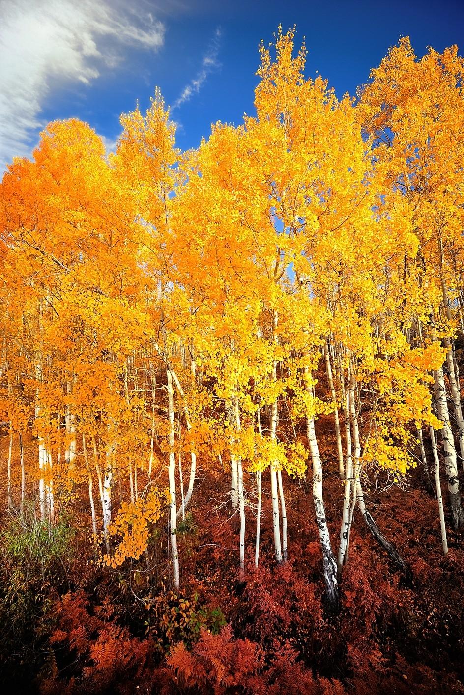 pristine aspen colorado magic Image
