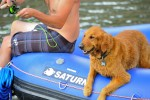 Upper Colorado River Golden Retriever