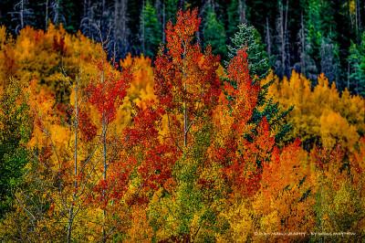 Phoenix Rising Rocky Mountain Autumn Fire