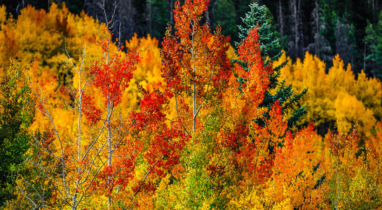 MAD Fall Colors 2017 Photography Tours & Landscape Workshops
