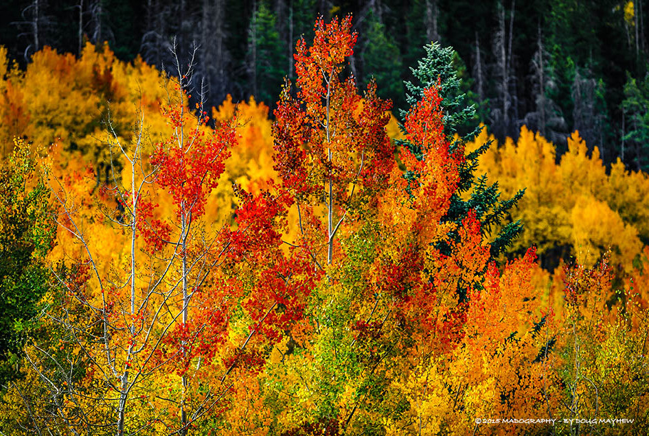Telluride Colorado Fall Foliage Photography Tours & Landscape Workshops Image