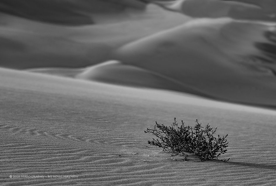Wind Cut Sand Dune Life Odyssey Resilient Image